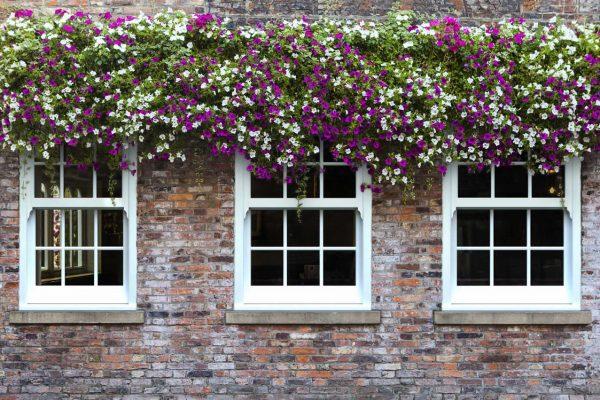 White sash windows